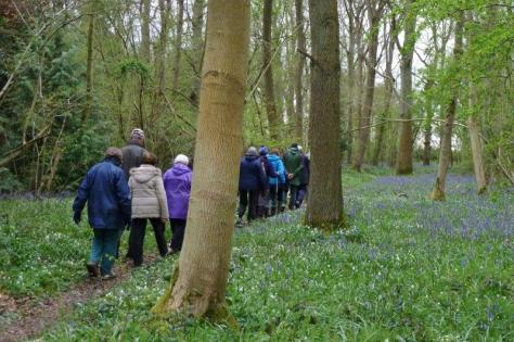 07 April Flower Walk in South Cubbington Wood 24.4.16. Frances Wilmot P1080731