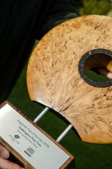 England's Tree of the Year trophy 2015